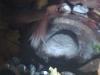 KothakondaTemple-shivalingam